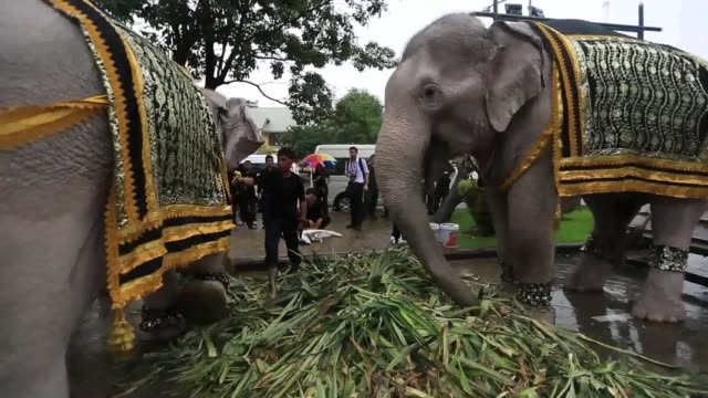 royal elephants and mahouts from ayuthaya province march for the grand palace to pay respect to late thailand king bhumibol adulyadej in bangkok... - ayuthaya province stock videos and b-roll footage