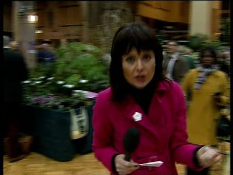 royal horticultural society winter flower show in london; england: london: rhs horticultural halls: int reporter to camera walking through the rhs... - royal horticultural society stock-videos und b-roll-filmmaterial