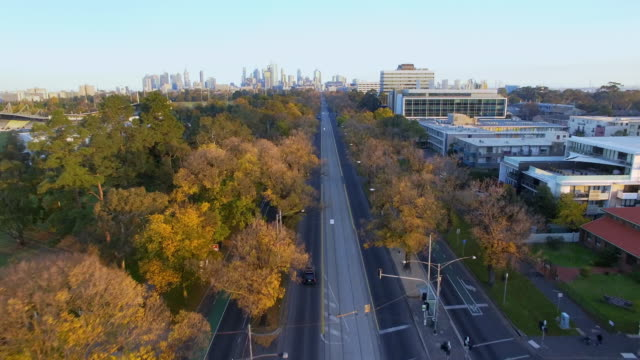 royal parade melbourne during the late afternoon autumn light. - david ewing stock videos & royalty-free footage