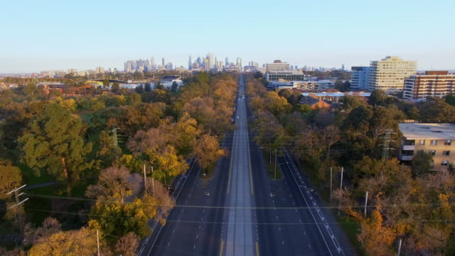 royal parade melbourne during the late afternoon autumn light. - diminishing perspective stock videos & royalty-free footage