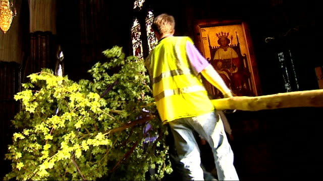 trees delivered to westminster abbey; int tree inside abbey entrance / tree moving into abbey as carried by workmen / workmen removing purple straps... - tomb of the unknown warrior westminster abbey stock videos & royalty-free footage