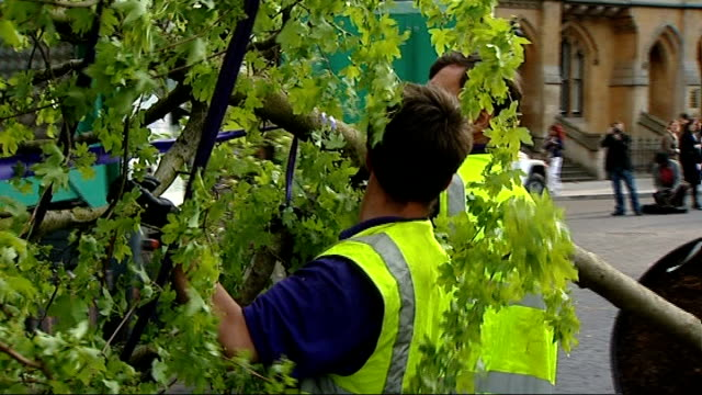 stockvideo's en b-roll-footage met trees delivered to westminster abbey tourists watching pan to truck unloading trees / workers steadying large tree as unloaded by forklift truck /... - laten zakken