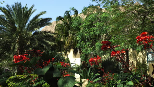 royalty free stock video footage of oasis greenery at ein gedi shot in israel at 4k with red. - botanical garden stock videos & royalty-free footage