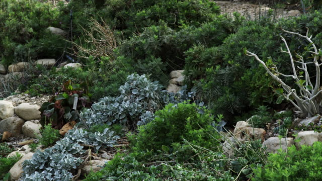 vídeos de stock e filmes b-roll de royalty free stock video footage of vegetation amid rocks at ein gedi shot in israel at 4k with red. - colo