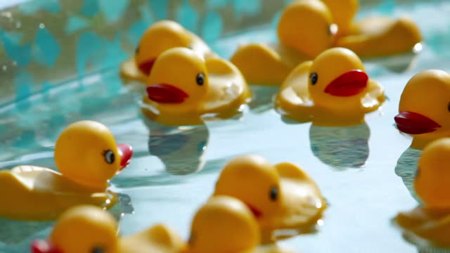 cu rubber ducks floating in small pool / new paltz, new york, united states - new paltz stock videos and b-roll footage