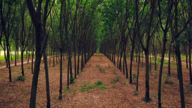 rubber plantation in thailand - plantation stock videos & royalty-free footage
