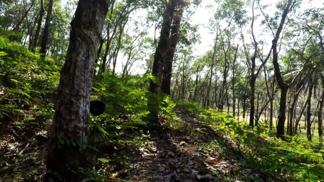 rubber plantation - timber stock videos & royalty-free footage