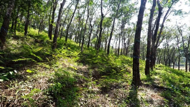 rubber plantation - collection stock videos & royalty-free footage