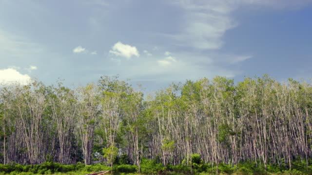 vídeos y material grabado en eventos de stock de ms rubber plantation - actividad de agricultura