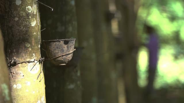vídeos de stock, filmes e b-roll de extração de borracha - látex borracha