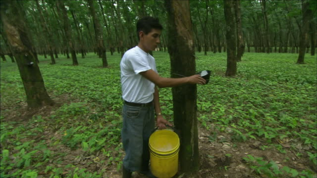 a rubber worker collects latex from rubber trees. - latex stock videos & royalty-free footage