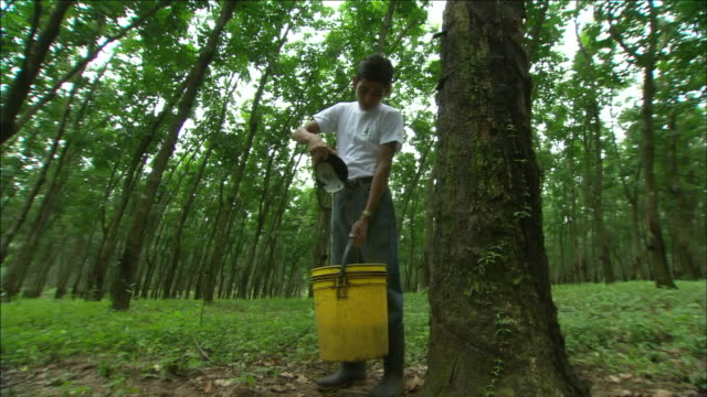 rubber workers collect latex from rubber. - latex stock videos & royalty-free footage