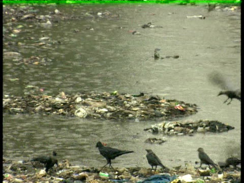 rubbish floating in flood waters - wirbeltier stock-videos und b-roll-filmmaterial