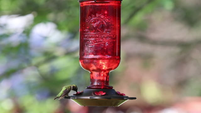 ruby-throated hummingbird clip 2 - ruby throated hummingbird stock videos and b-roll footage