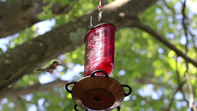 ruby-throated hummingbird clip 4 - ruby throated hummingbird stock videos and b-roll footage