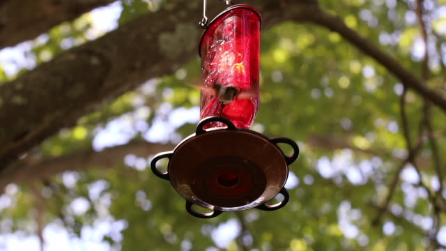 ruby-throated hummingbird clip 5 - ruby throated hummingbird stock videos and b-roll footage