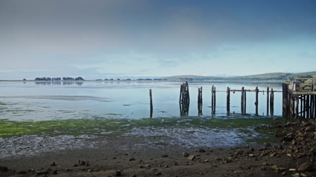 ruined piers at bodega bay - tide out stock videos & royalty-free footage