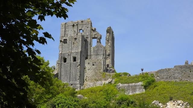 vídeos y material grabado en eventos de stock de ruins of corfe castle. - grupo mediano de animales