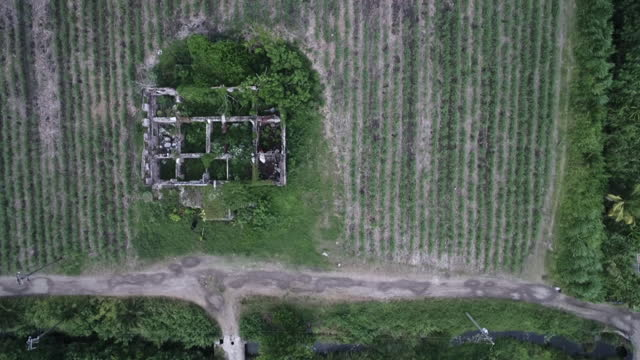 ruins of sugar plantation houses and factories, jamaica - slavery stock videos & royalty-free footage
