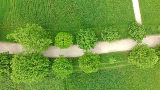 vidéos et rushes de coureur exécutant sur une route de gravier bordée d'arbre - suivre activité avec mouvement