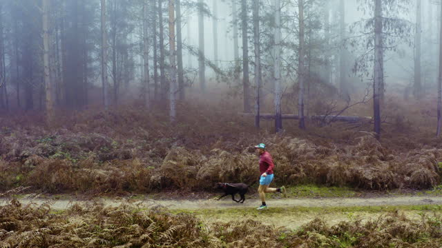 runner with his dog on forest track - only mid adult men stock videos & royalty-free footage