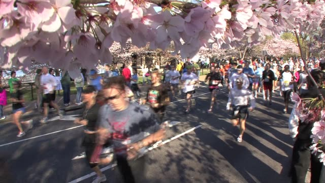 vídeos y material grabado en eventos de stock de runners by cherry blossom trees during the cherry blossom ten mile road race in washington dc runners by cherry blossom trees springtime on april 02... - salmini