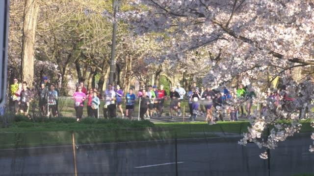 vidéos et rushes de runners pass cherry blossom trees - salmini
