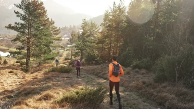 Runners running down a grassy mountain trail along a forest on a sunny day