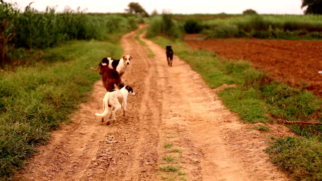 Running Away Dogs
