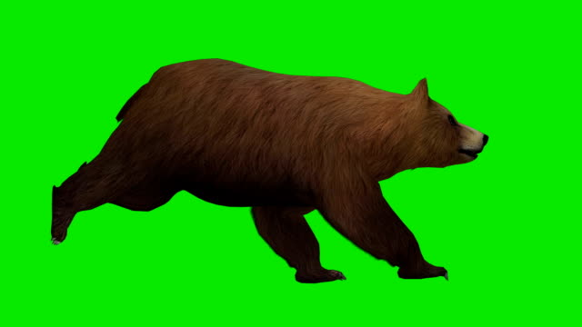 running bear green screen (loopable) - bear stock videos and b-roll footage