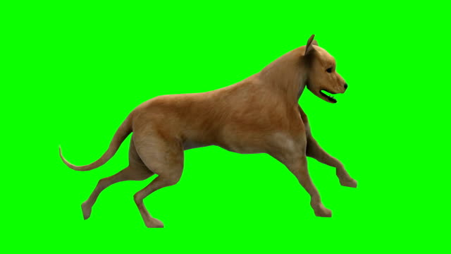 Running Dog Green Screen (Loopable)