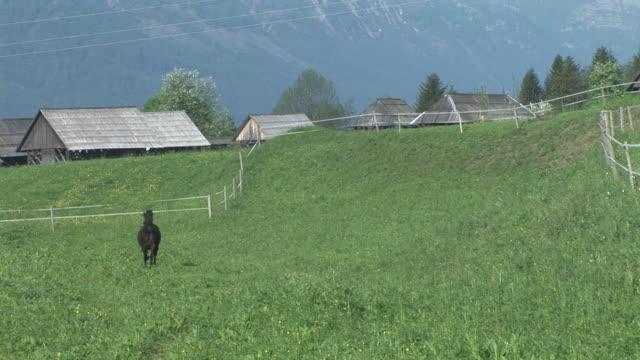 hd: running horse - stallion stock videos & royalty-free footage