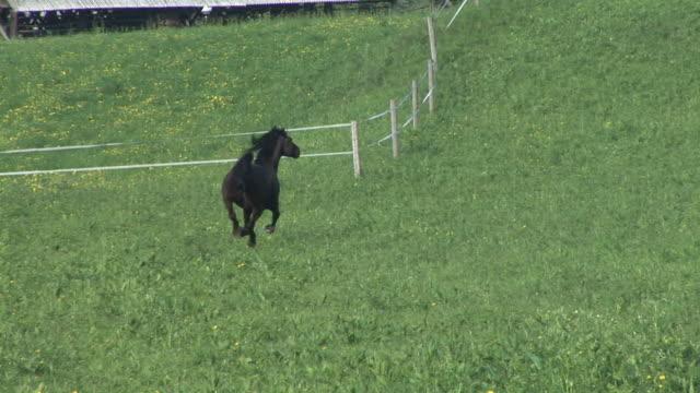hd: a running horse - galoppera bildbanksvideor och videomaterial från bakom kulisserna