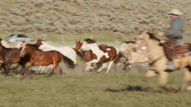 stockvideo's en b-roll-footage met uitvoeren van paarden en cowboys in utah usa - australische herder