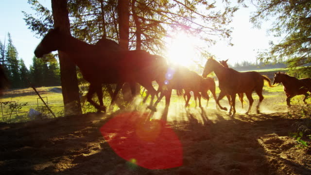 running horses in forest roundup dude ranch america - gallop animal gait stock videos & royalty-free footage