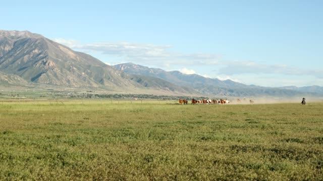 vidéos et rushes de chevaux en cours d'exécution dans le pays - genderblend