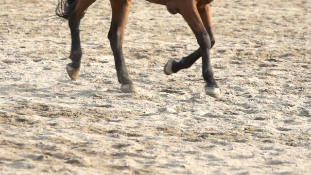 running  horse's legs and hooves in slow motion - battle stock videos & royalty-free footage