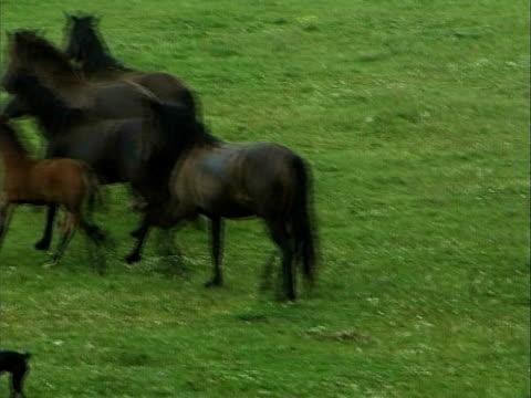 vídeos y material grabado en eventos de stock de correr caballos - grupo mediano de animales