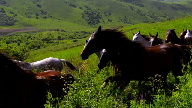 Course de chevaux de bois