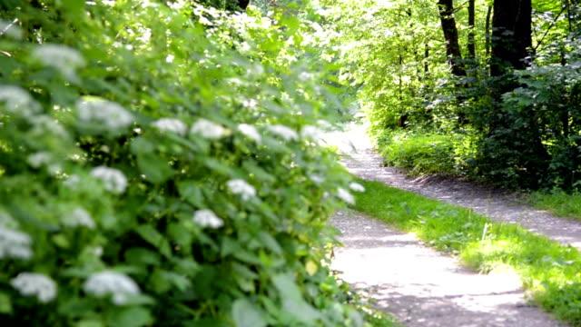 vídeos de stock, filmes e b-roll de correndo na natureza - área arborizada