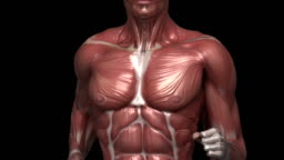 Running muscular man with visible muscles front view