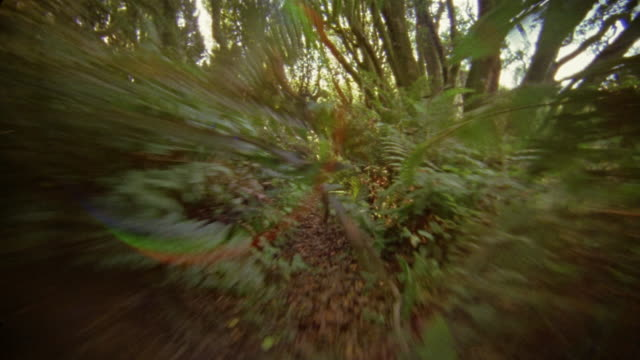 running pov on forest trail/ california - point of view stock videos and b-roll footage