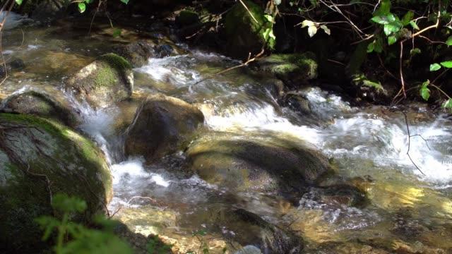 森の中で流れを走る - 小川点の映像素材/bロール