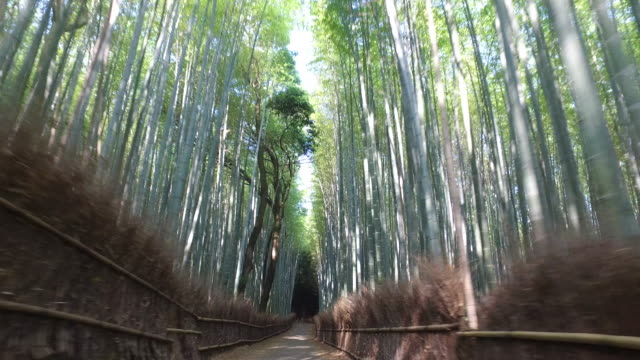 running through bamboo forest - kyoto stock videos and b-roll footage