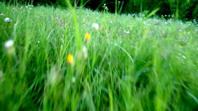 stockvideo's en b-roll-footage met running through green grass - hd - shaky