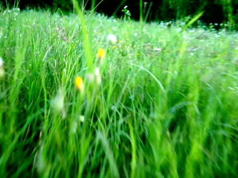 vídeos y material grabado en eventos de stock de corriendo a través de la hierba verde-ntsc - cámara movida