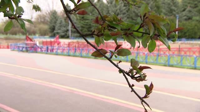 vídeos y material grabado en eventos de stock de running track and magnolia branch in wind - árbol de hoja caduca