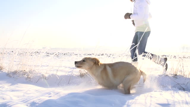 slo mo running with puppy in snow - offspring stock videos & royalty-free footage