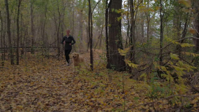 running with the dog in autumn - relaxation exercise stock videos & royalty-free footage