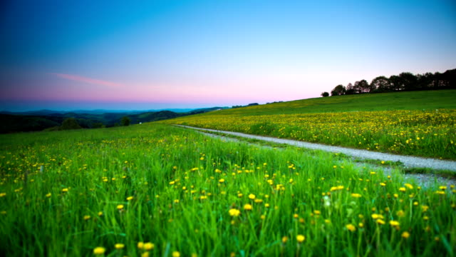 CRANE UP: Rura Road through Spring Meadow